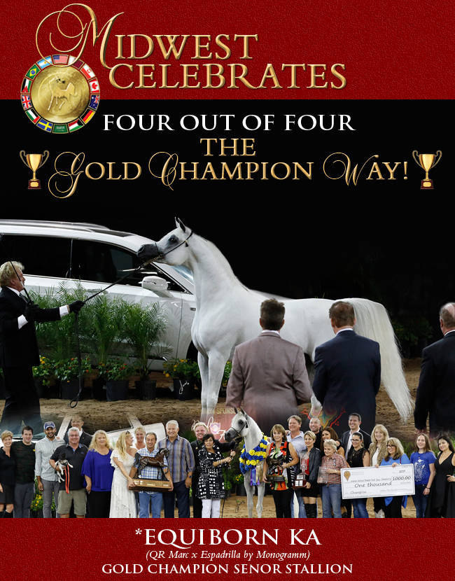 Midwest Celebrates The Gold Champions Of The Arabian National Breeders Finals