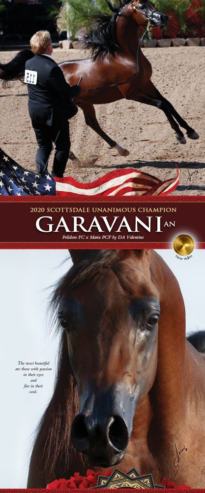 Cast In The Image Of DA Valentino – Garavani AN