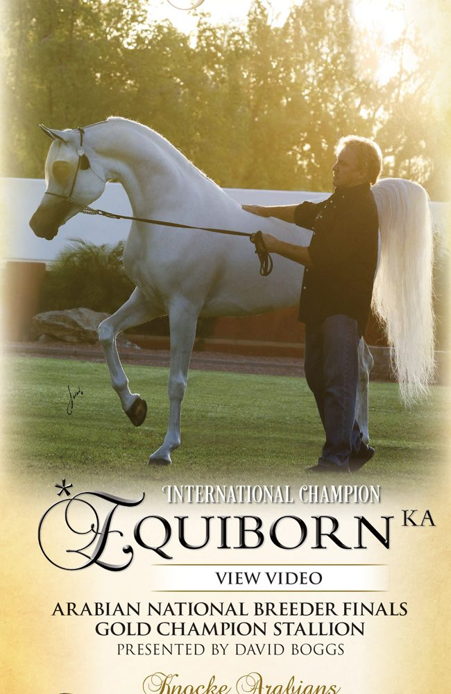 Excellence In Ivory – *Equiborn KA – View Video