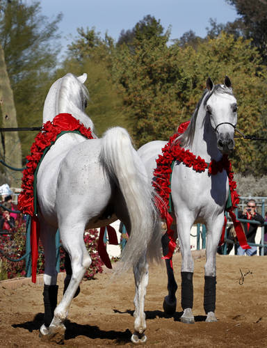 2015 Midwest Arabhorse.com Farm Tour