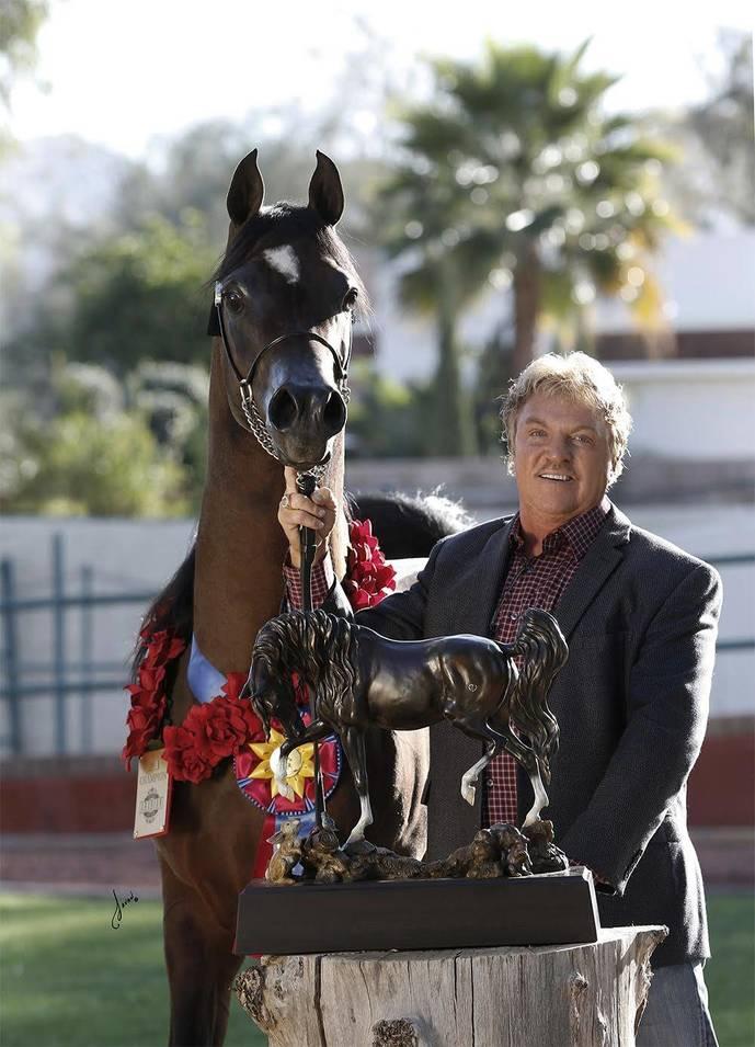 *SM Azraff – 2017 Scottsdale Unanimous Champion Senior Stallion