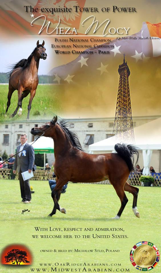 Midwest & Oak Ridge Arabians welcomes the World Champion *Wieza Mocy