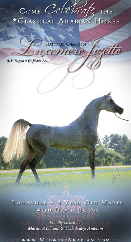 Luxemere Jizette ~ Louisville 4 Year Old Mares with David Boggs