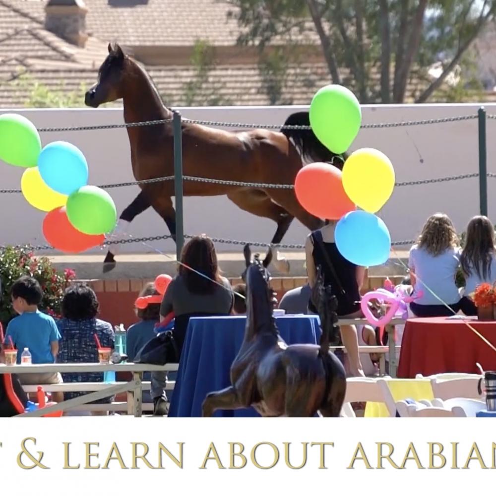 Meet An Arabian Horse