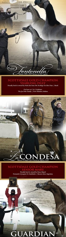 The Scottsdale International Show – Midwest Highlights Their Champions