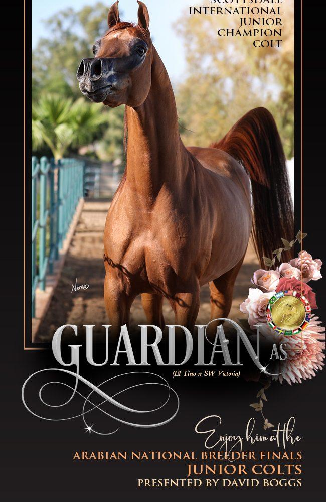 Stone Ridge – The Arabian National Breeders Finals – Guardian And David Boggs