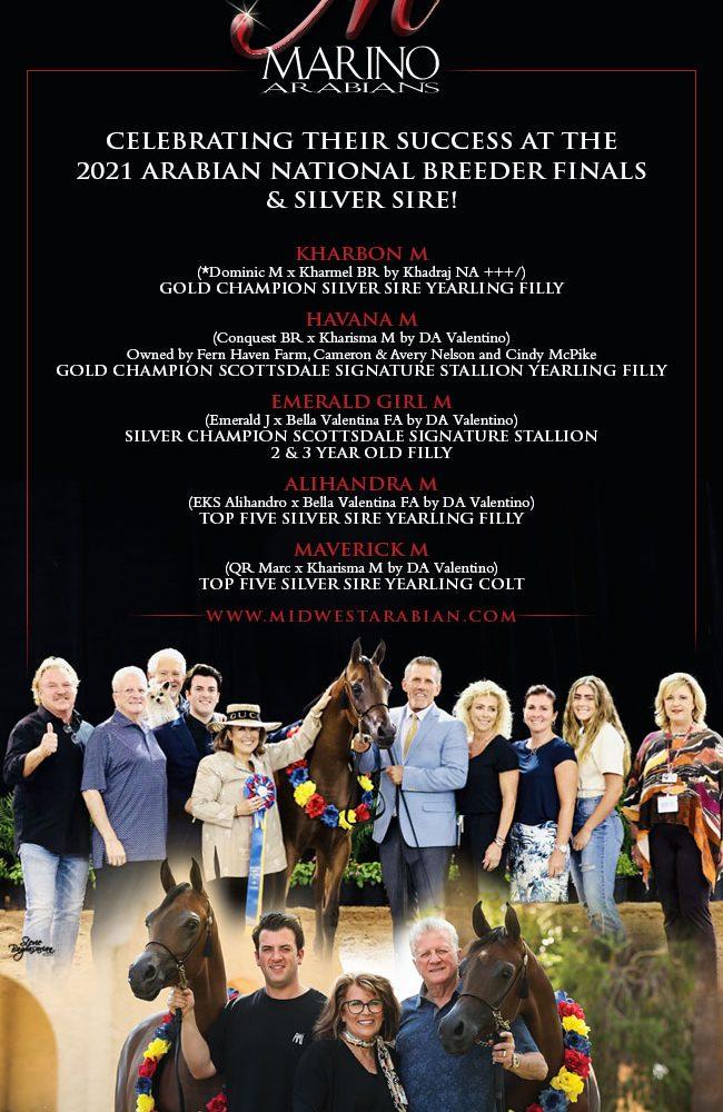 Marino Arabians – Where Champions Are Bred